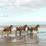 Entrainement de chevaux sur la plage