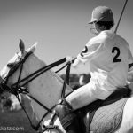 Polo in the wings - Nicolas Katz
